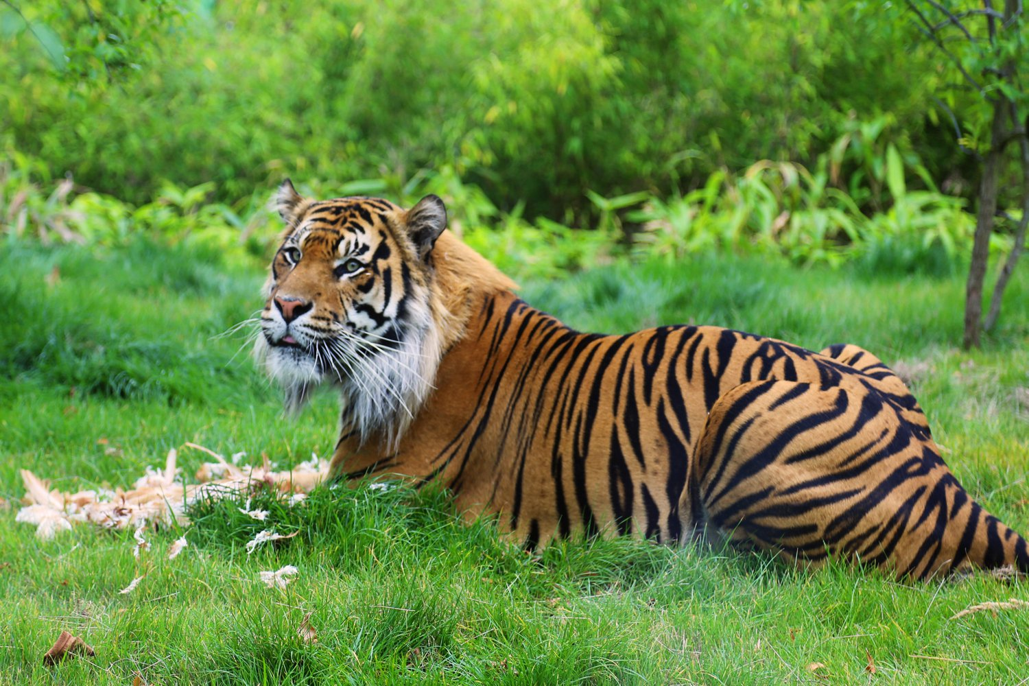 UK's Incredible Zoos For Tourists