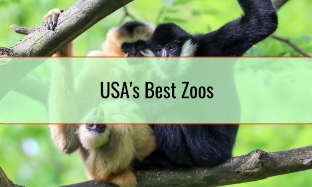 USA's Best Zoos