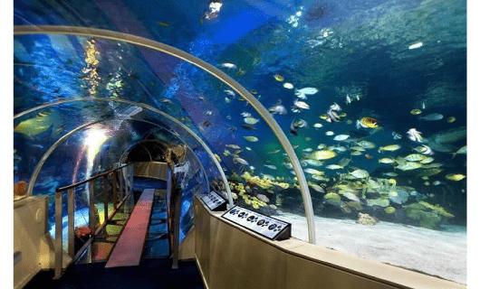 Birmingham National Sealife Centre