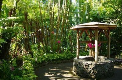 The Botanical Gardens Studies Experience