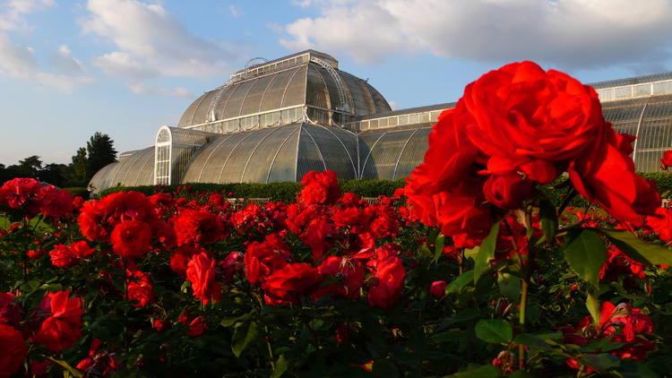royal-botanic-gardens-kew-richmond