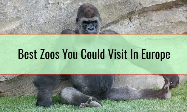 Best Zoos You Could Visit In Europe